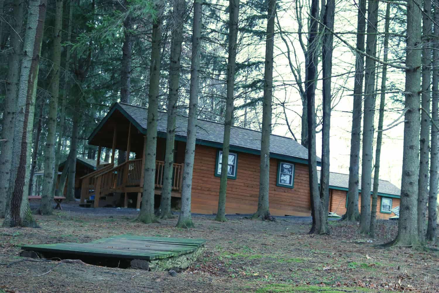 Buttonwood Cabins among trees